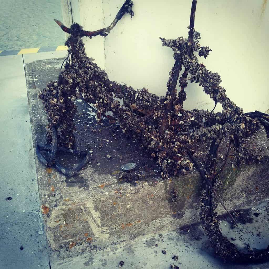 rozpadnuty a totalne zarasteny bicykel