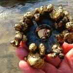 Je možné s magnetom nájsť zlato? Môžete vybrať mince z fontány?