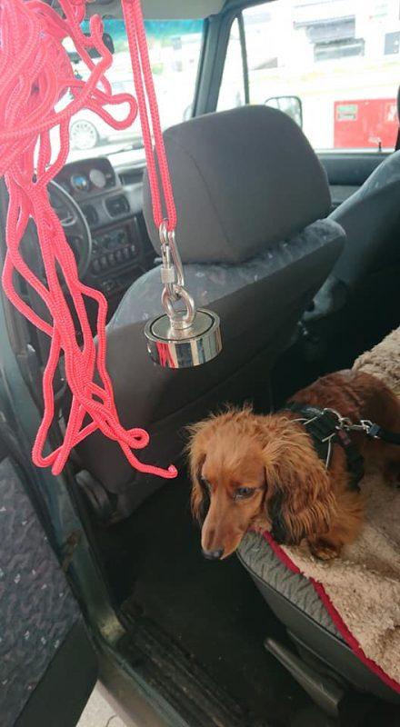 Pes v aute, ku ktorému sa blíži extra silný magnet