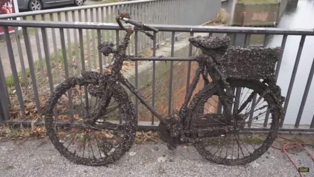 Bicykel zarastený ústricami